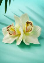 50s Double Orchid Double Pretty Hair Clip in Cream